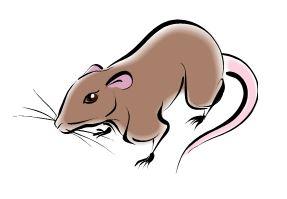 Lutte collective contre les rats, souris et taupes