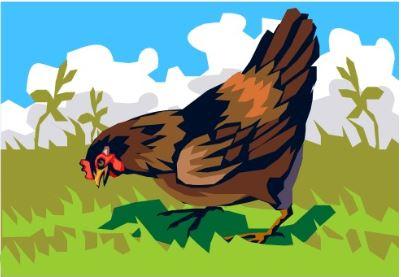 L'influenza aviaire dans les basses-cours